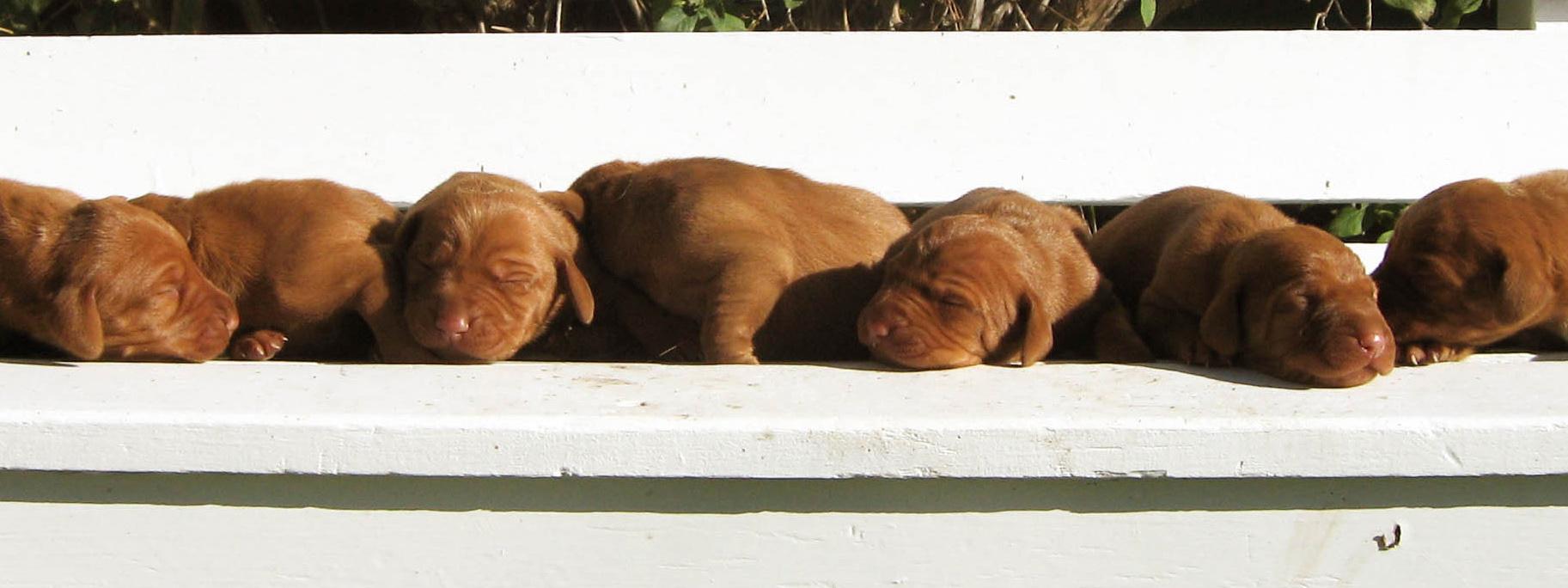 puppiesbenchslider