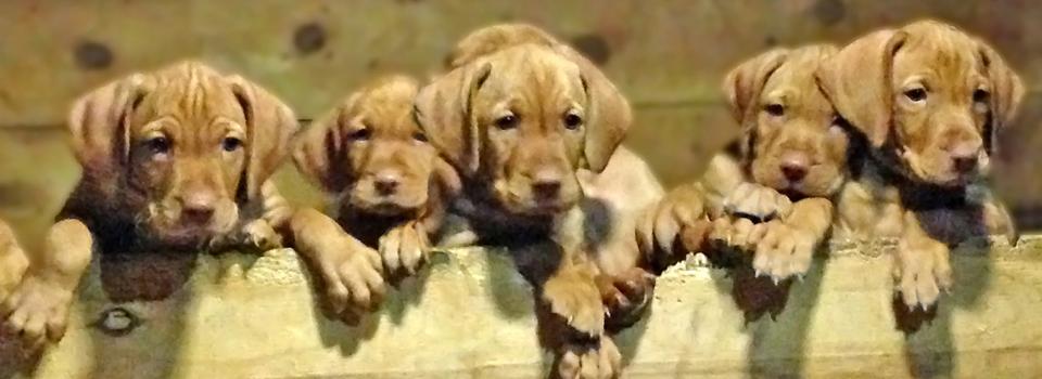 puppies29
